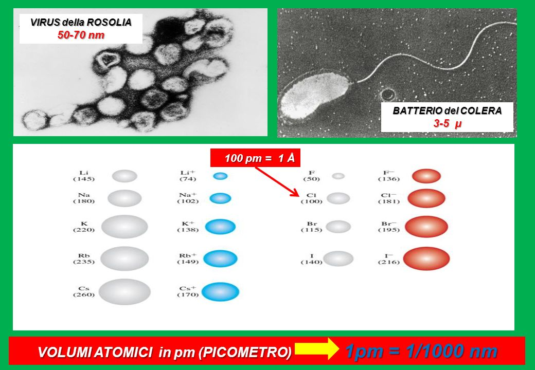 VIRUS della ROSOLIA 50-70 nm BATTERIO del COLERA 3-5 µ VOLUMI ATOMICI in pm (PICOMETRO) 1pm = 1/1000 nm 100 pm = 1 Å