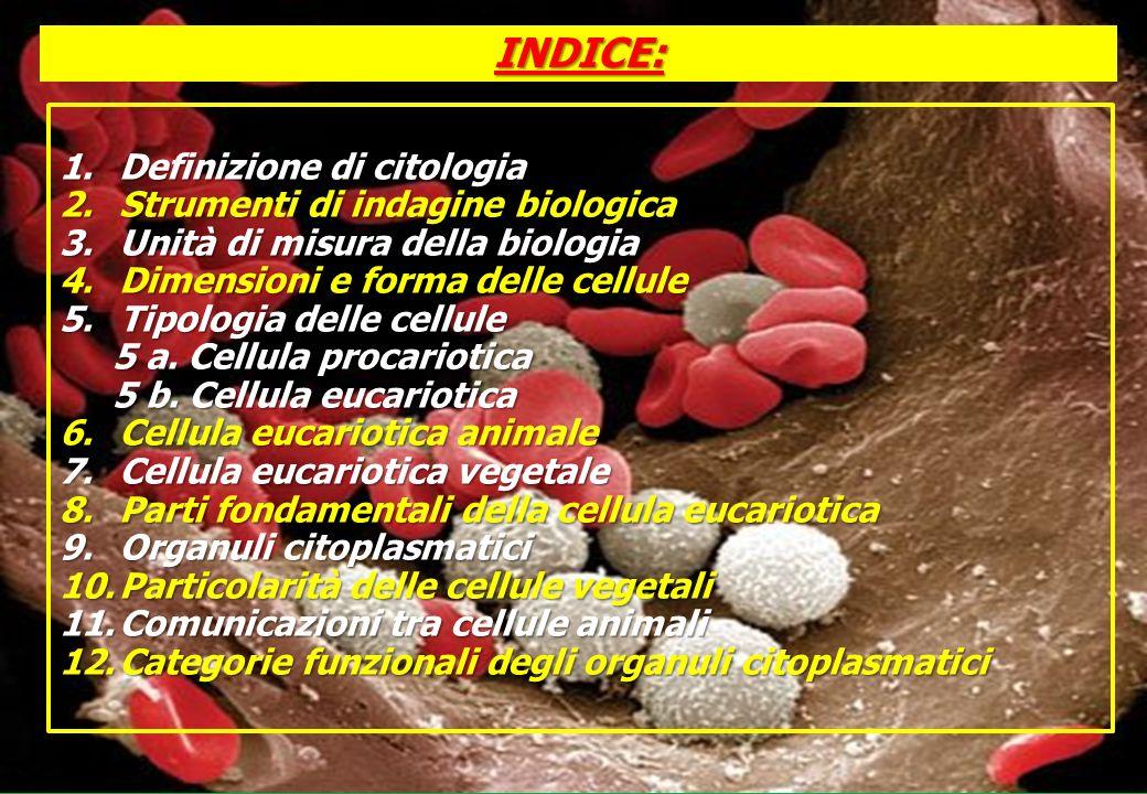 3. UNITA di MISURA della BIOLOGIA