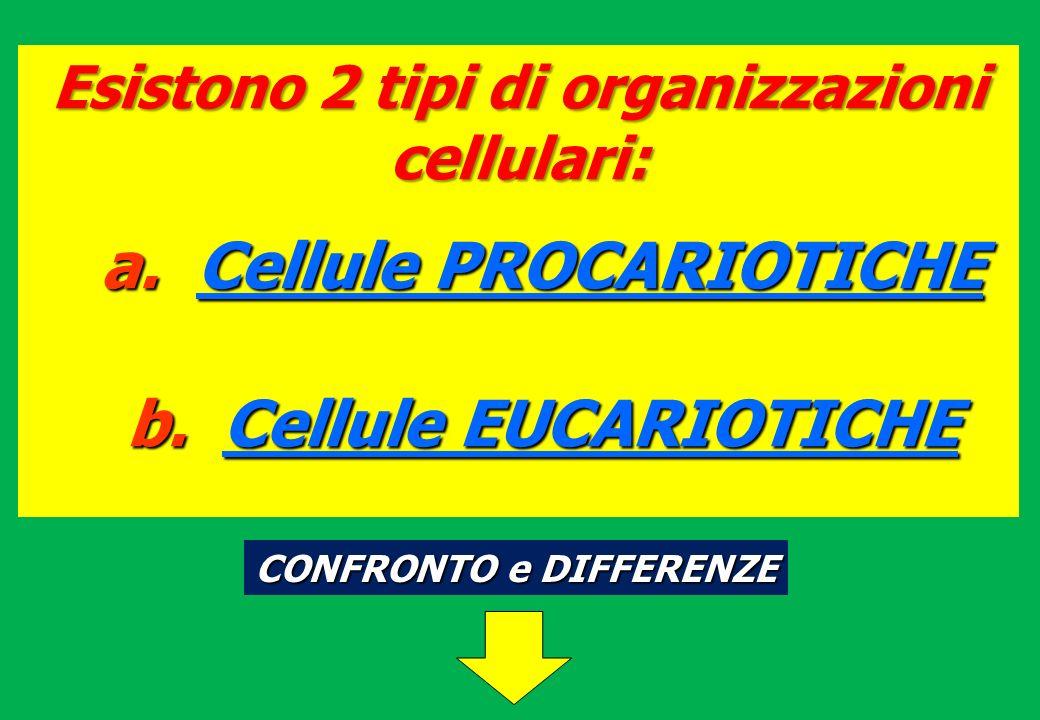 Esistono 2 tipi di organizzazioni cellulari: a.Cellule PROCARIOTICHE b.Cellule EUCARIOTICHE CONFRONTO e DIFFERENZE