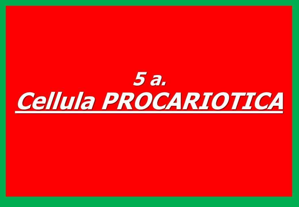 5 a. Cellula PROCARIOTICA