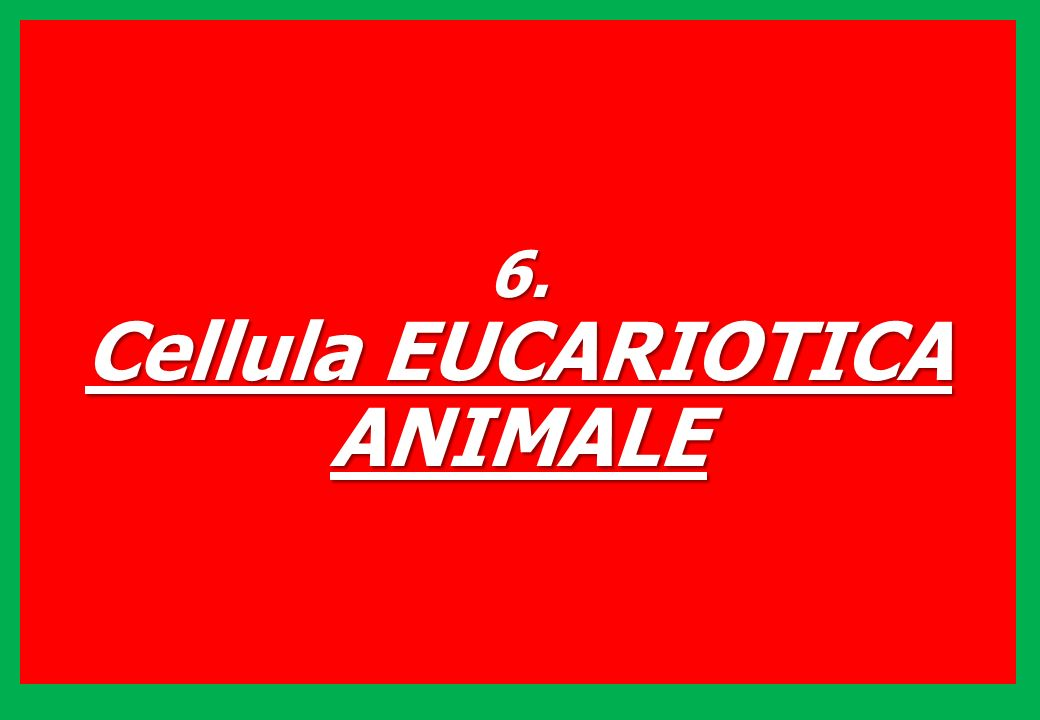 6. Cellula EUCARIOTICA ANIMALE