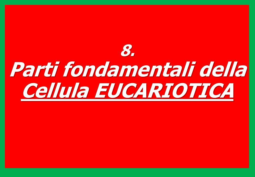 8. Parti fondamentali della Cellula EUCARIOTICA
