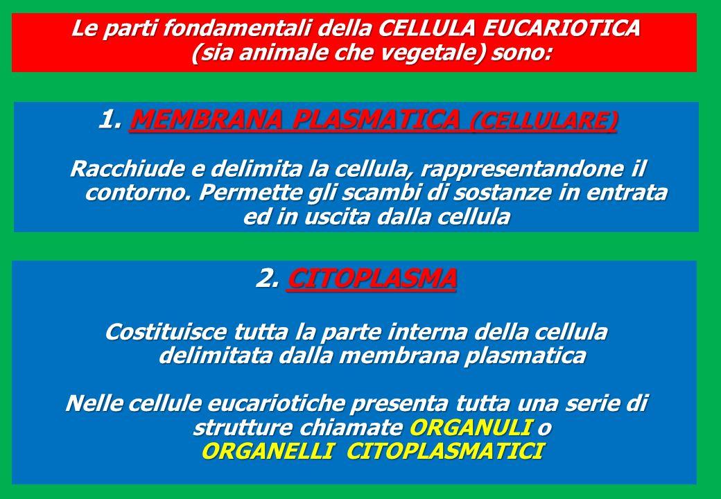 Le parti fondamentali della CELLULA EUCARIOTICA (sia animale che vegetale) sono: 1. MEMBRANA PLASMATICA (CELLULARE) Racchiude e delimita la cellula, r