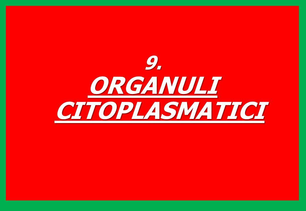 9. ORGANULI CITOPLASMATICI