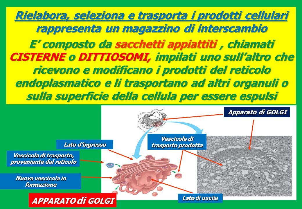 Rielabora, seleziona e trasporta i prodotti cellulari rappresenta un magazzino di interscambio E composto da sacchetti appiattiti, chiamati CISTERNE o
