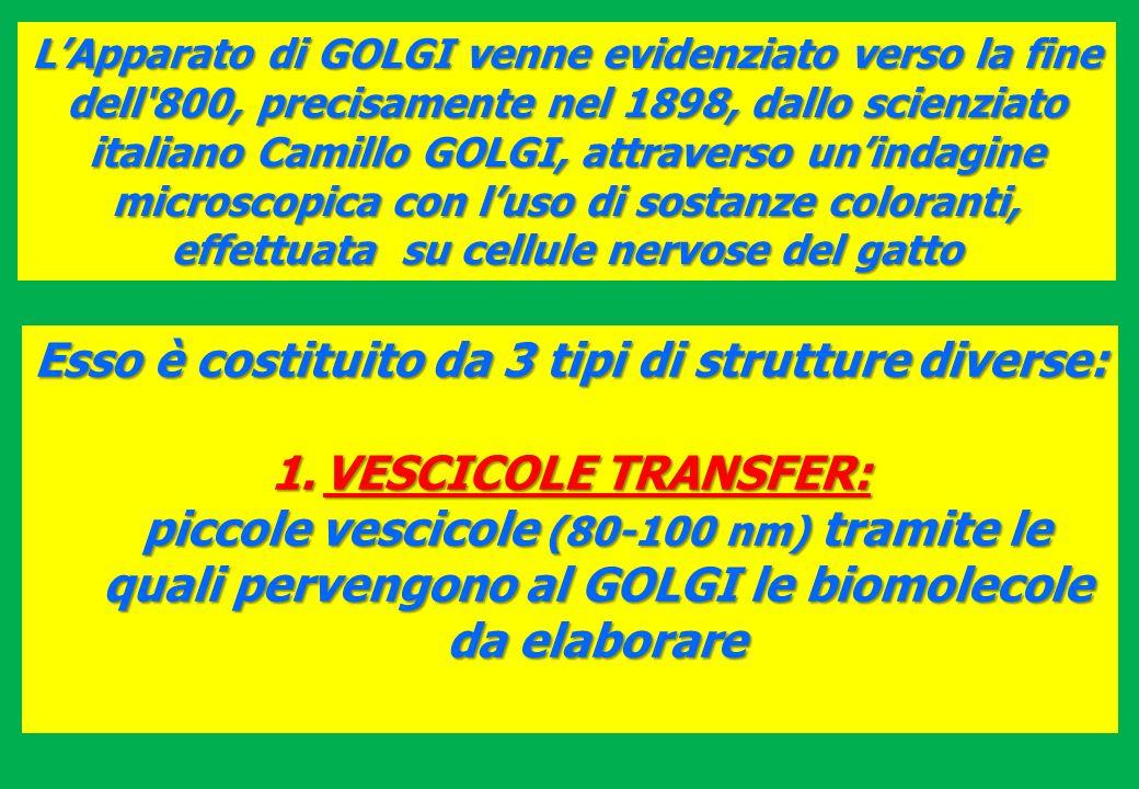 LApparato di GOLGI venne evidenziato verso la fine dell'800, precisamente nel 1898, dallo scienziato italiano Camillo GOLGI, attraverso unindagine mic