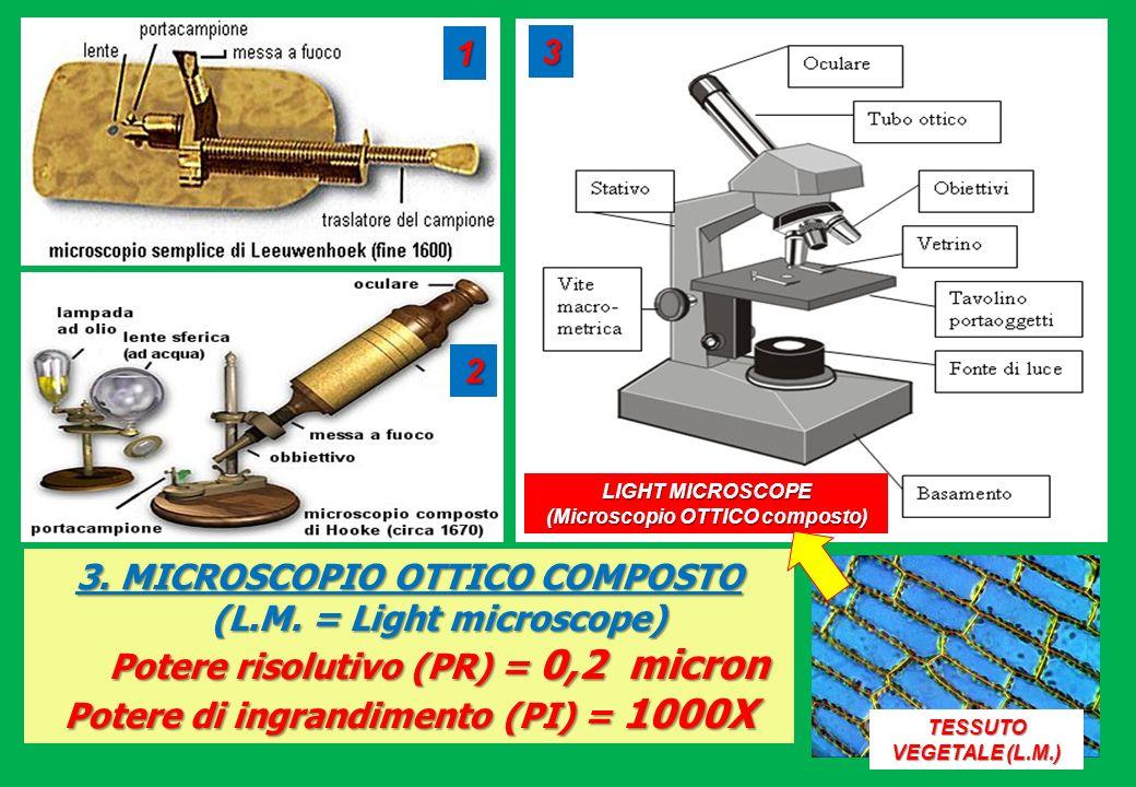 3. MICROSCOPIO OTTICO COMPOSTO (L.M. = Light microscope) Potere risolutivo (PR) = 0,2 micron Potere di ingrandimento (PI) = 1000X TESSUTO VEGETALE (L.