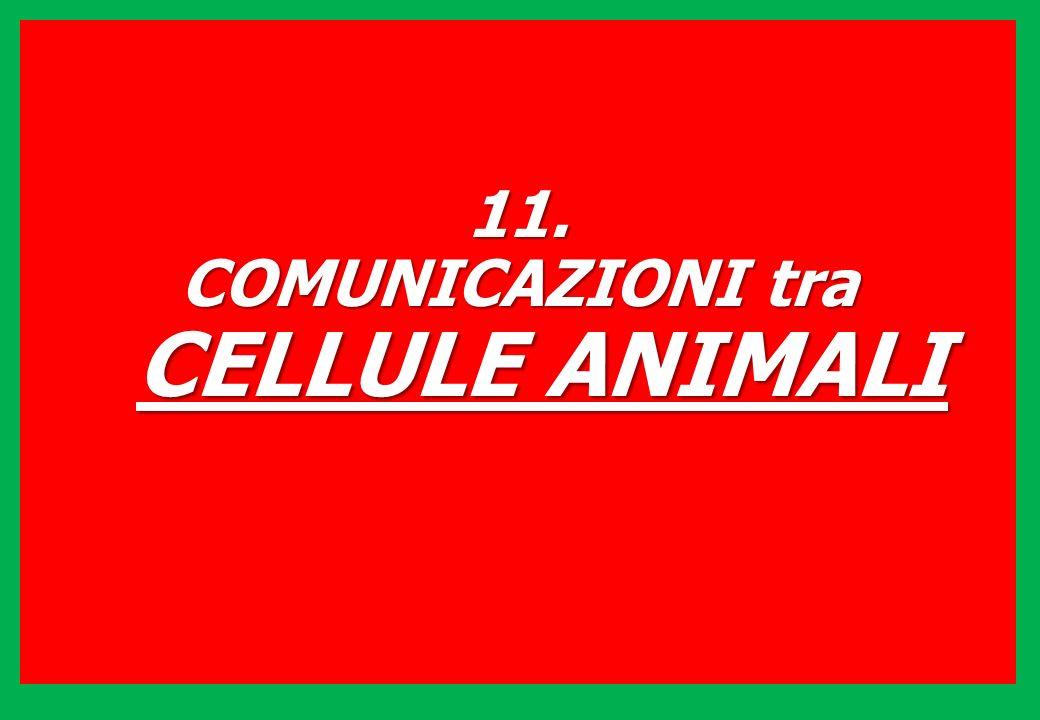 11. COMUNICAZIONI tra CELLULE ANIMALI