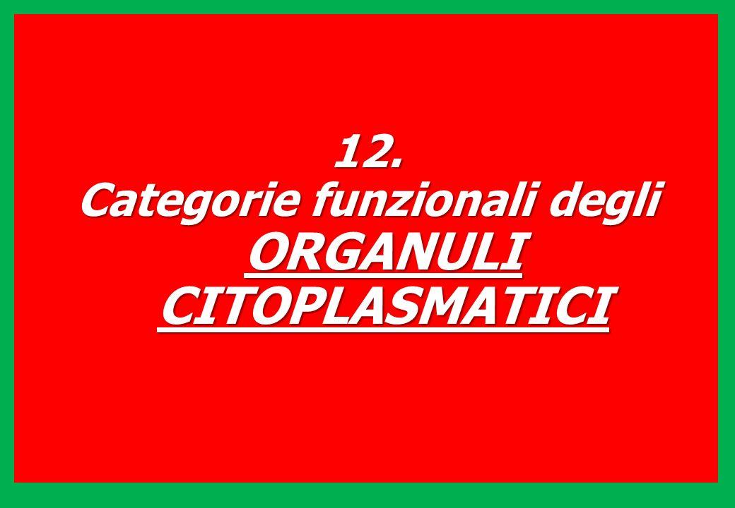 12. Categorie funzionali degli ORGANULI CITOPLASMATICI