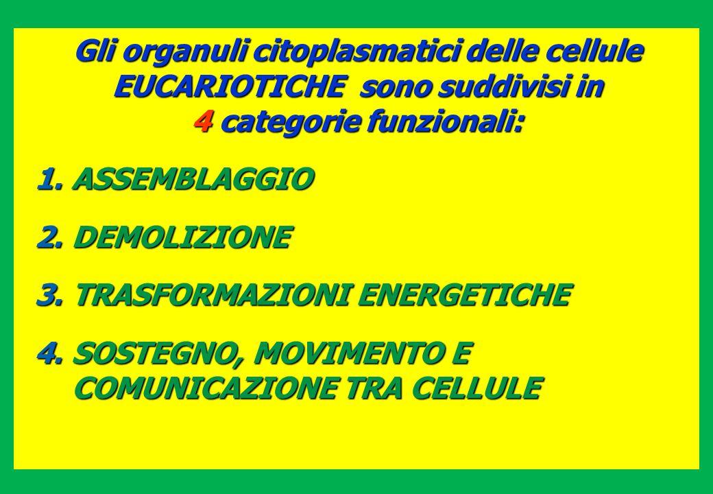 Gli organuli citoplasmatici delle cellule EUCARIOTICHE sono suddivisi in 4 categorie funzionali: 1.ASSEMBLAGGIO 2.DEMOLIZIONE 3.TRASFORMAZIONI ENERGET