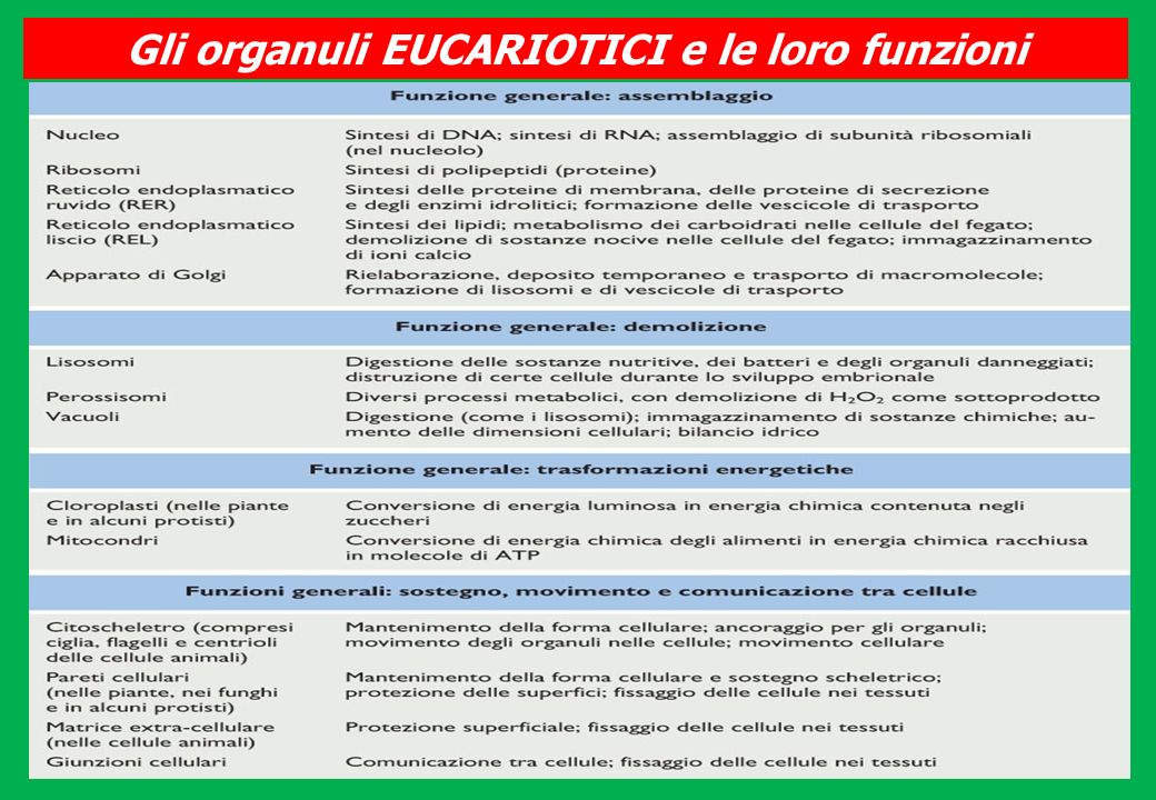 Gli organuli EUCARIOTICI e le loro funzioni