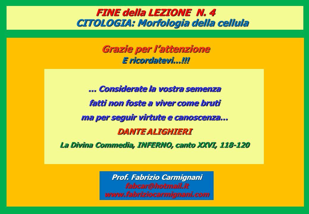 FINE della LEZIONE N. 4 CITOLOGIA: Morfologia della cellula Grazie per lattenzione E ricordatevi…!!! Prof. Fabrizio Carmignani fabcar@hotmail.itwww.fa