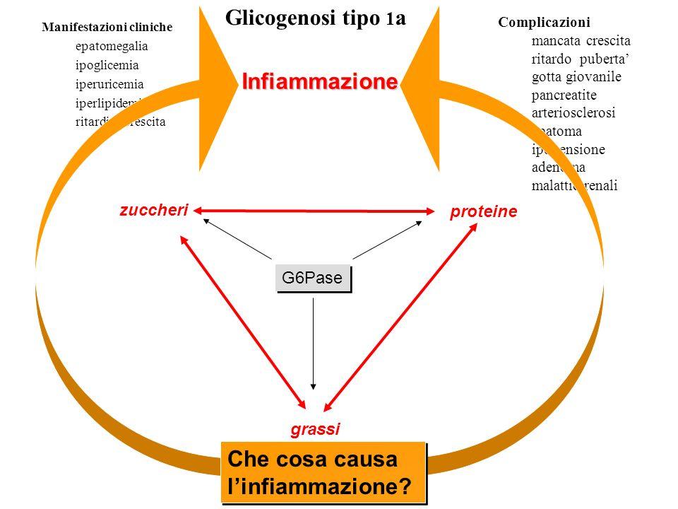 Glicogenosi tipo 1 a Manifestazioni cliniche epatomegalia ipoglicemia iperuricemia iperlipidemia ritardi di crescita Complicazioni mancata crescita ri