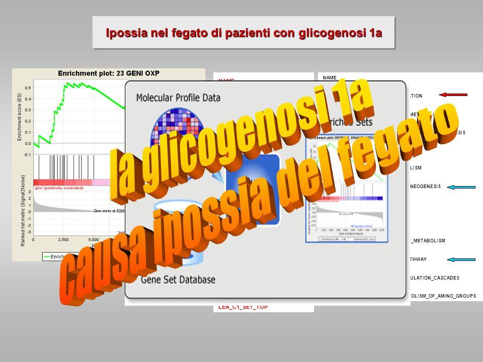 Ipossia nel fegato di pazienti con glicogenosi 1a NAME 23 GENI OXP HYPOXIA_REG_UP LINES_MYC_LEA NB-HYPO_32 GENES L1L2_11PBST HYPOXIA_RCC_NOVHL_UP L1L2