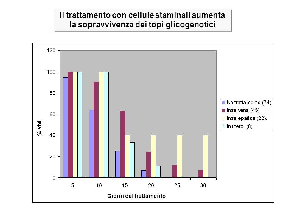 Non trattati Trattati v.t. Trattati i.f. Trattati i.e. % vivi Giorni dal trattamento Il trattamento con cellule staminali aumenta la sopravvivenza dei