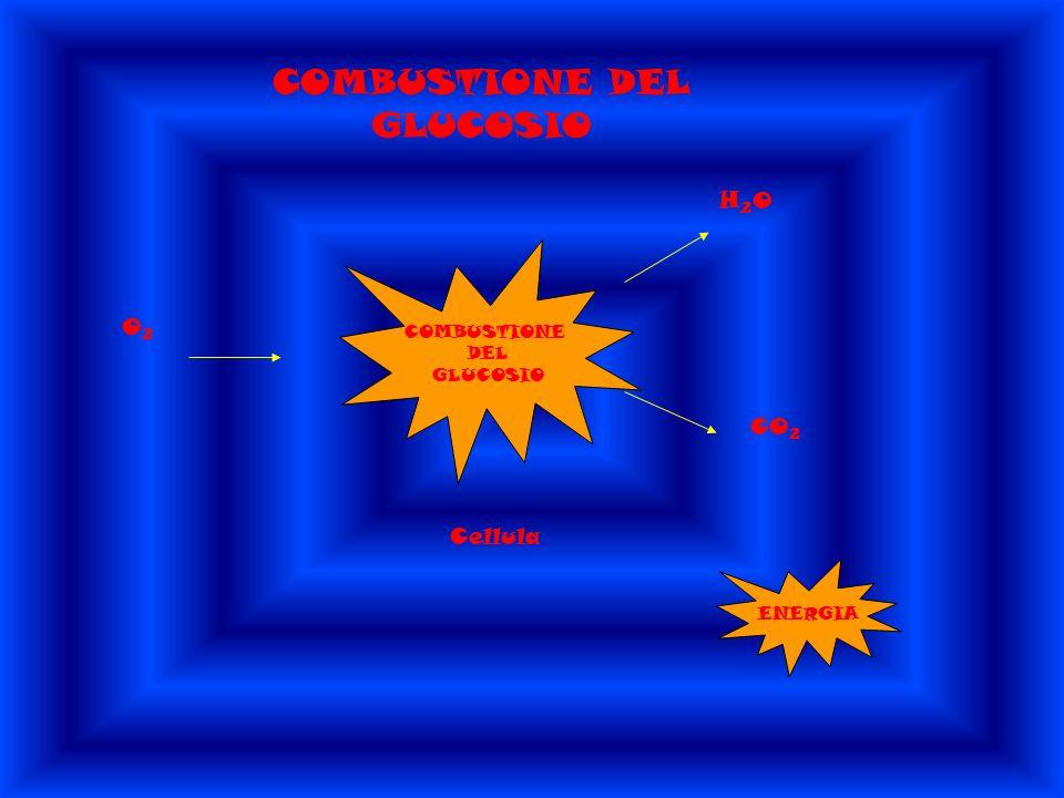 COMBUSTIONE DEL GLUCOSIO COMBUSTIONE DEL GLUCOSIO O 2 Cellula H 2 O CO 2 ENERGIA