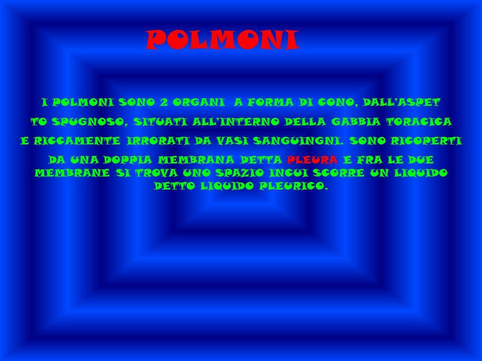 POLMONI I POLMONI SONO 2 ORGANI A FORMA DI CONO, DALLASPET TO SPUGNOSO, SITUATI ALLINTERNO DELLA GABBIA TORACICA E RICCAMENTE IRRORATI DA VASI SANGUINGNI.