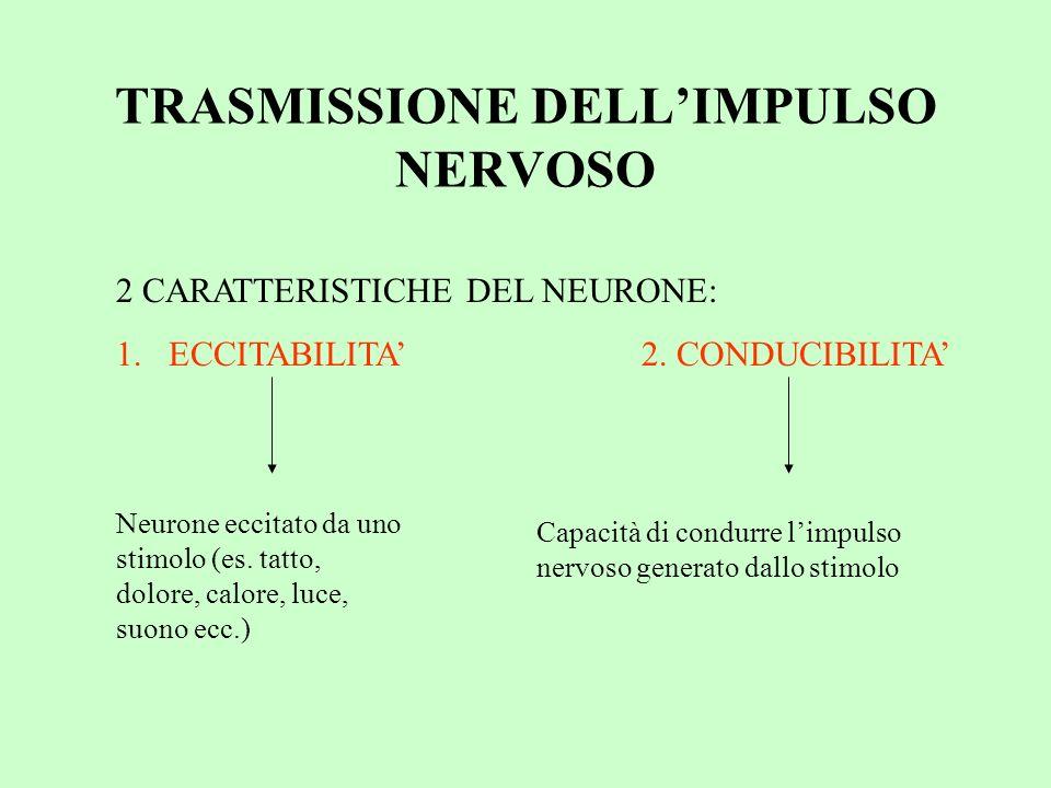 TRASMISSIONE DELLIMPULSO NERVOSO 2 CARATTERISTICHE DEL NEURONE: 1.ECCITABILITA2. CONDUCIBILITA Neurone eccitato da uno stimolo (es. tatto, dolore, cal