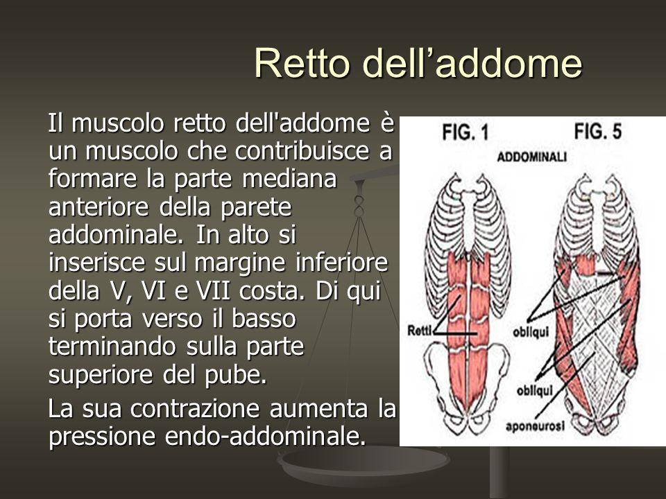 Retto delladdome Retto delladdome Il muscolo retto dell'addome è un muscolo che contribuisce a formare la parte mediana anteriore della parete addomin