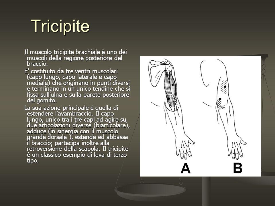 Tricipite Tricipite Il muscolo tricipite brachiale è uno dei muscoli della regione posteriore del braccio. Il muscolo tricipite brachiale è uno dei mu