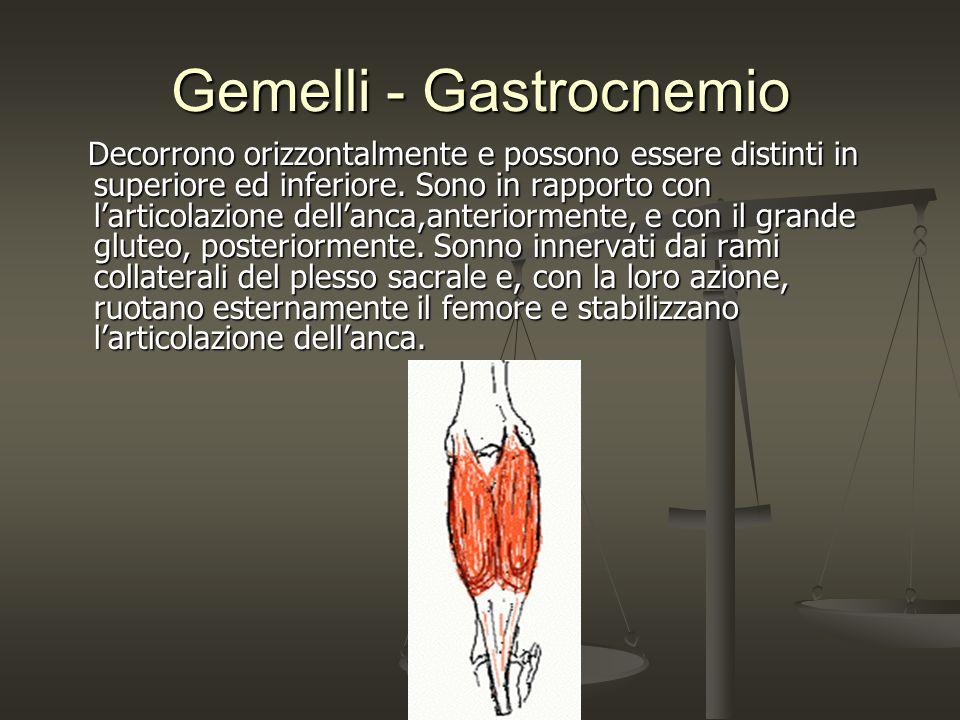 Gemelli - Gastrocnemio Decorrono orizzontalmente e possono essere distinti in superiore ed inferiore. Sono in rapporto con larticolazione dellanca,ant