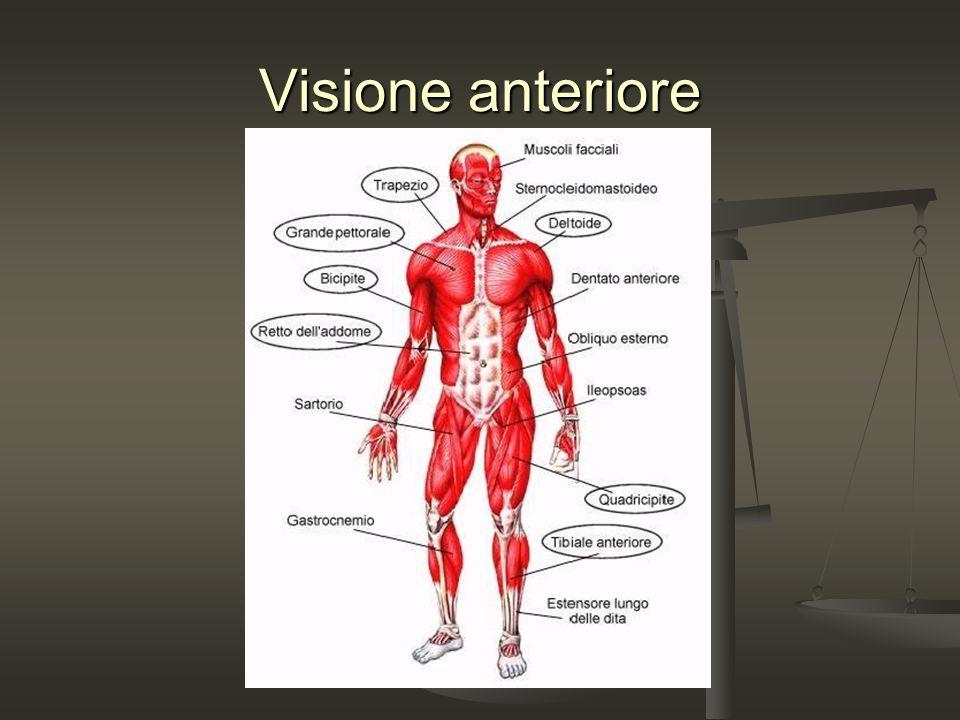 Visione anteriore