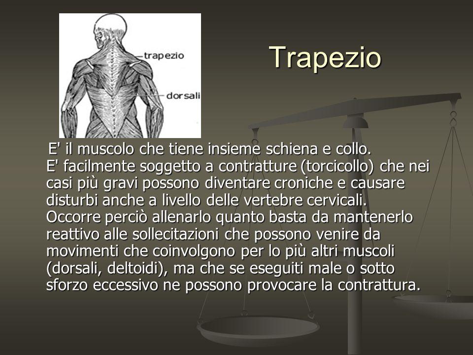 Trapezio Trapezio E' il muscolo che tiene insieme schiena e collo. E' facilmente soggetto a contratture (torcicollo) che nei casi più gravi possono di