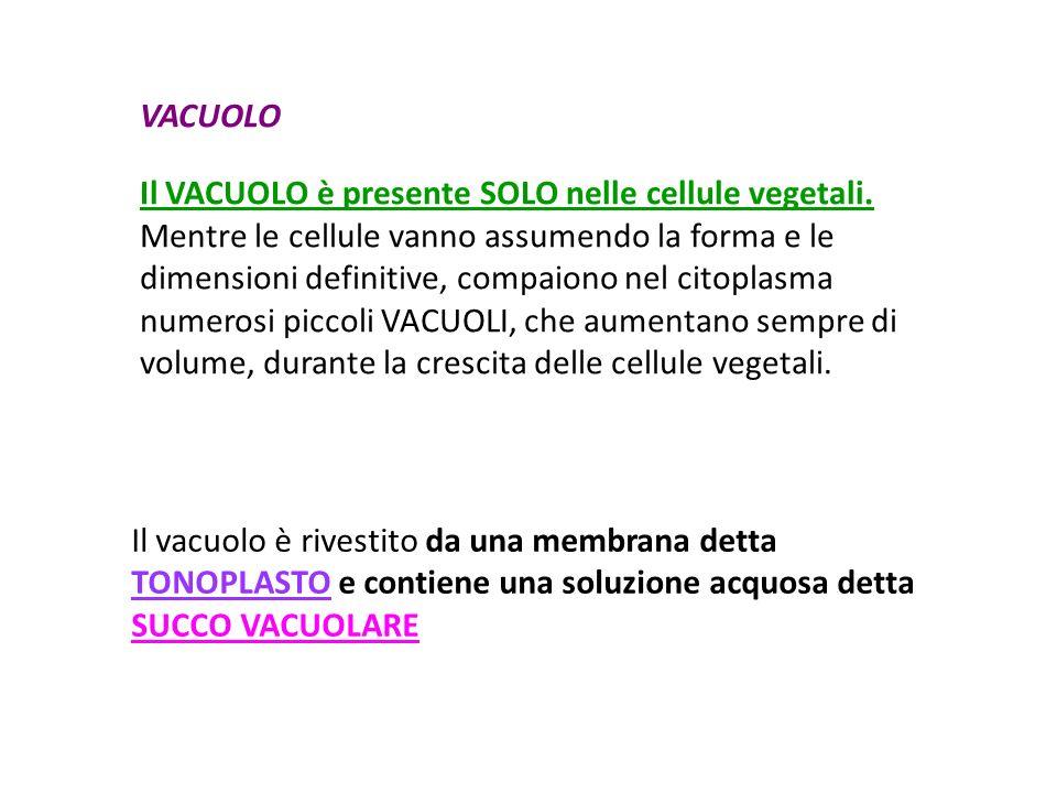 VACUOLO Il VACUOLO è presente SOLO nelle cellule vegetali.