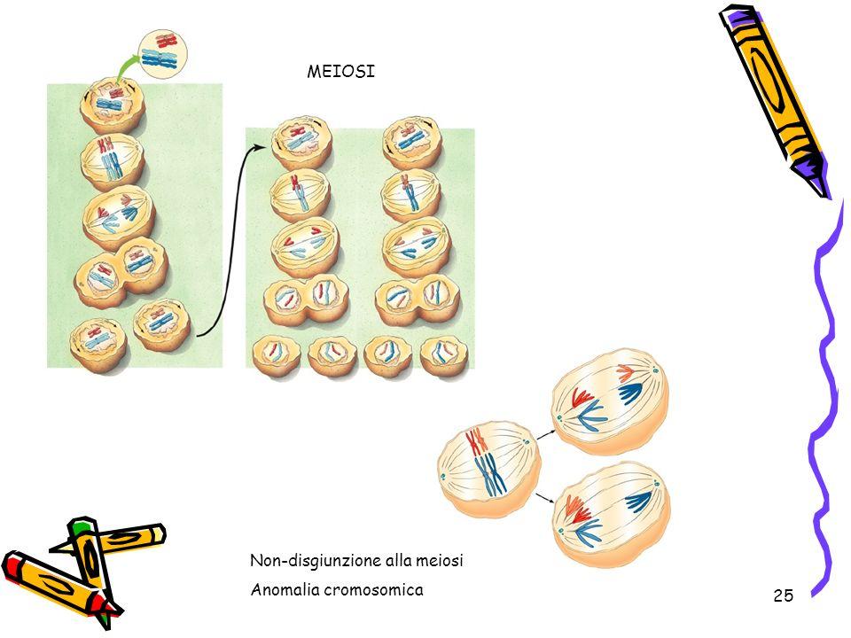 25 MEIOSI Non-disgiunzione alla meiosi Anomalia cromosomica