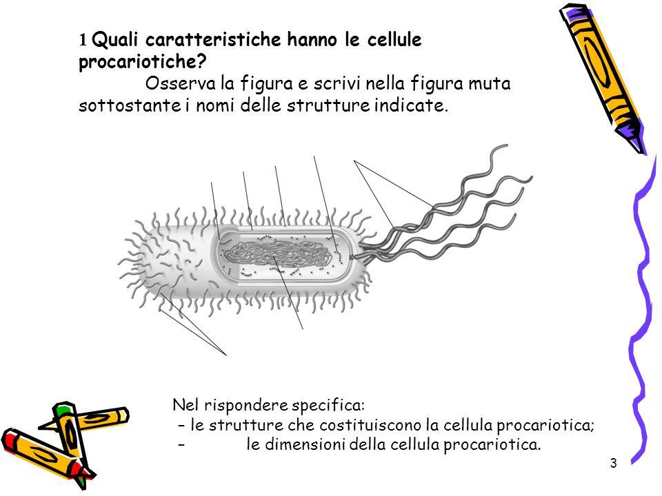 3 1 Quali caratteristiche hanno le cellule procariotiche? Osserva la figura e scrivi nella figura muta sottostante i nomi delle strutture indicate. Ne