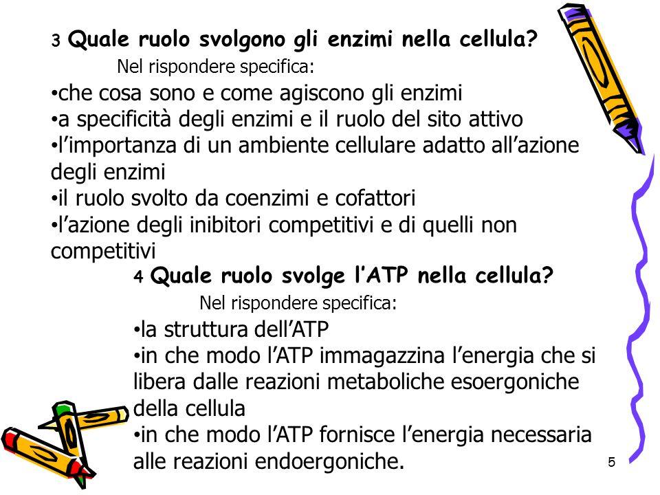 5 3 Quale ruolo svolgono gli enzimi nella cellula? Nel rispondere specifica: che cosa sono e come agiscono gli enzimi a specificità degli enzimi e il