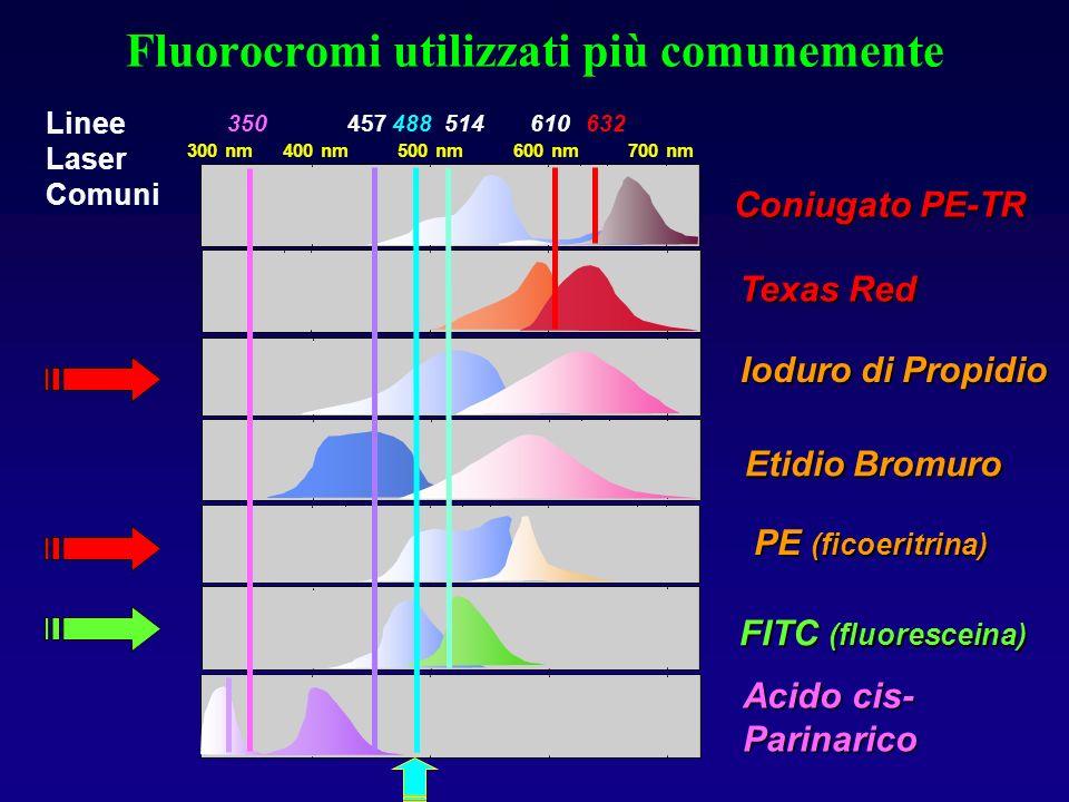 Cella di Flusso Iniettore Segnale di Fluorescenza Fluorescenza Raggio laser focalizzato focalizzato Fluido di rivestimento Linfocito Monocito Granulocito Schema generale della camera di flusso di un citofluorimetro