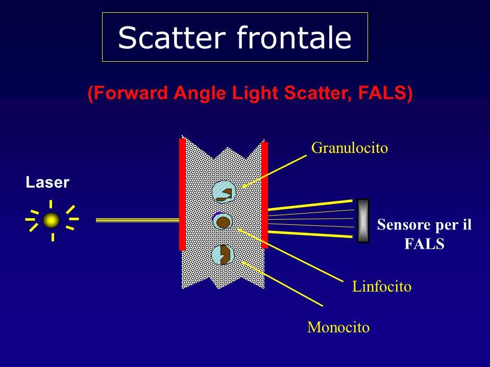 Quando viene utilizzata una sorgente laser, la quantità di luce scatterata nella direzione frontale (ovvero lungo lo stesso asse attraverso cui viaggia la luce laser) viene raccolta nel canale del forward scatter L intensità del forward scatter è proporzionale alla dimensione, forma ed omogeneità ottica delle cellule (o delle altre particelle analizzate)