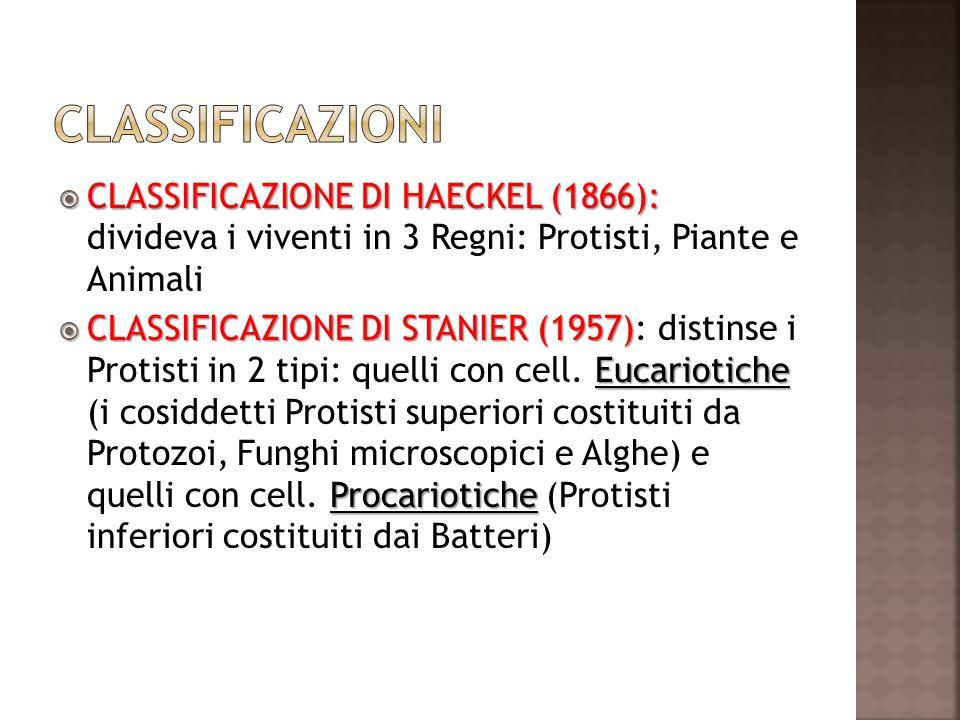 CLASSIFICAZIONE DI HAECKEL (1866): CLASSIFICAZIONE DI HAECKEL (1866): divideva i viventi in 3 Regni: Protisti, Piante e Animali CLASSIFICAZIONE DI STA