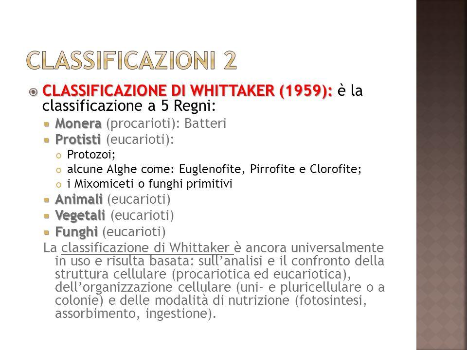 CLASSIFICAZIONE DI WHITTAKER (1959): CLASSIFICAZIONE DI WHITTAKER (1959): è la classificazione a 5 Regni: Monera Monera (procarioti): Batteri Protisti