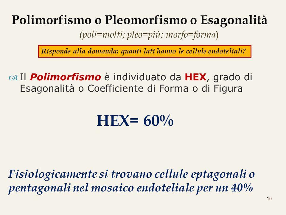 10 Polimorfismo o Pleomorfismo o Esagonalità (poli=molti; pleo=più; morfo=forma ) Il Polimorfismo è individuato da HEX, grado di Esagonalità o Coeffic