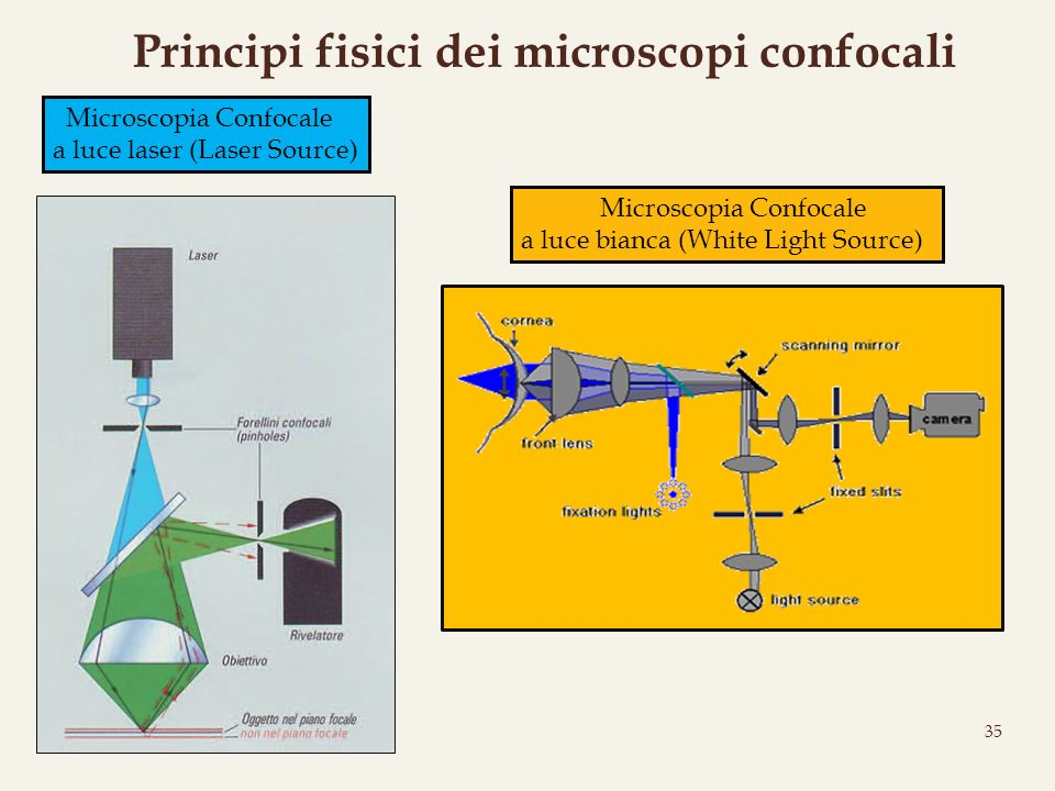 35 Principi fisici dei microscopi confocali Microscopia Confocale a luce bianca (White Light Source) Microscopia Confocale a luce laser (Laser Source)