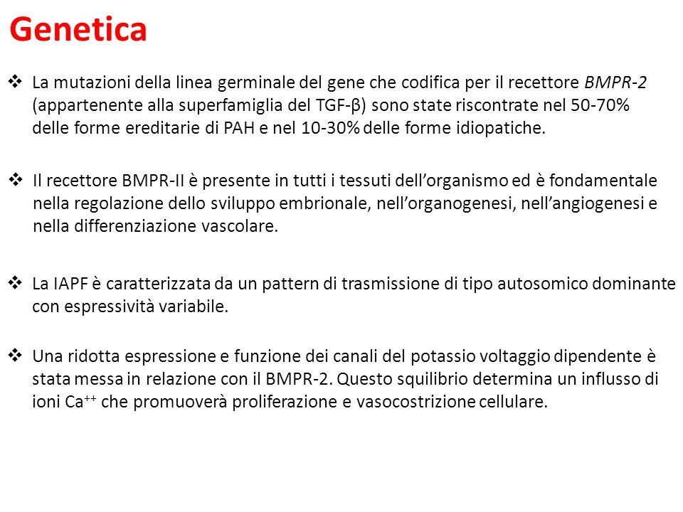 Genetica Il recettore BMPR-II è presente in tutti i tessuti dellorganismo ed è fondamentale nella regolazione dello sviluppo embrionale, nellorganogenesi, nellangiogenesi e nella differenziazione vascolare.