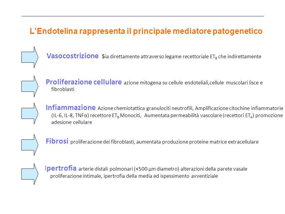 Vasocostrizione s ia direttamente attraverso legame recettoriale ET B che indirettamente Proliferazione cellulare azione mitogena su cellule endoteliali,cellule muscolari lisce e fibroblasti Fibrosi proliferazione dei fibroblasti, aumentata produzione proteine matrice extracellulare Infiammazione Azione chemiotattica granulociti neutrofili, Amplificazione citochine infiammatorie (IL-6, IL-8, TNFα) recettore ET B Monociti, Aumentata permeabilità vascolare (recettori ET A ) promozione adesione cellulare Ipertrofia arterie distali polmonari (<500 μm diametro) alterazioni della parete vasale proliferazione intimale, ipertrofia della media ed ispessimento avventiziale LEndotelina rappresenta il principale mediatore patogenetico