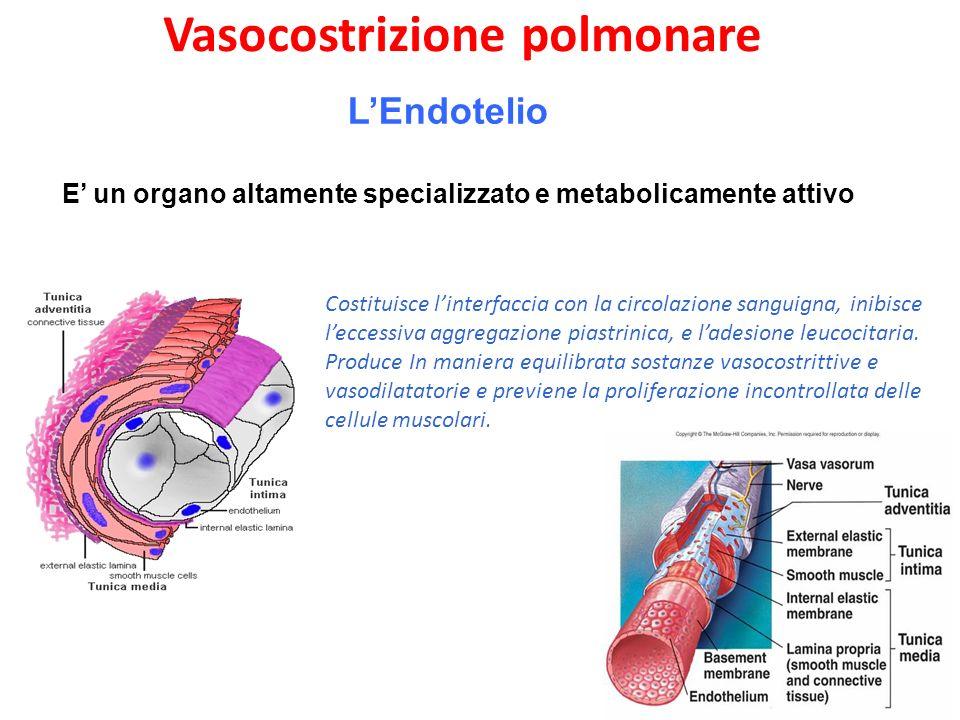 LEndotelio E un organo altamente specializzato e metabolicamente attivo Costituisce linterfaccia con la circolazione sanguigna, inibisce leccessiva aggregazione piastrinica, e ladesione leucocitaria.