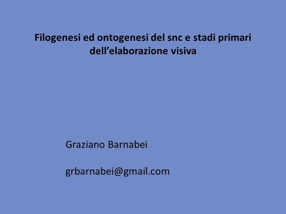 Filogenesi ed ontogenesi del snc e stadi primari dellelaborazione visiva Graziano Barnabei grbarnabei@gmail.com
