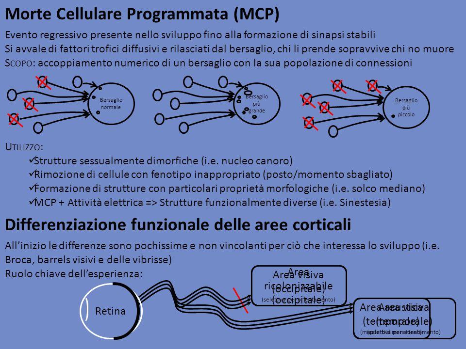 Evento regressivo presente nello sviluppo fino alla formazione di sinapsi stabili Si avvale di fattori trofici diffusivi e rilasciati dal bersaglio, c