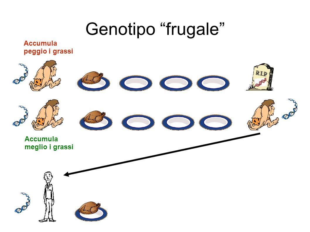 Genotipo frugale Accumula peggio i grassi Accumula meglio i grassi