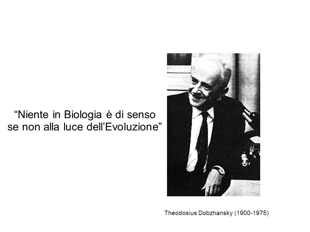 Niente in Biologia è di senso se non alla luce dellEvoluzione Theodosius Dobzhansky (1900-1975)