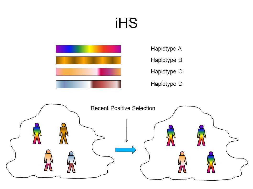 iHS Haplotype A Haplotype B Haplotype C Haplotype D Recent Positive Selection