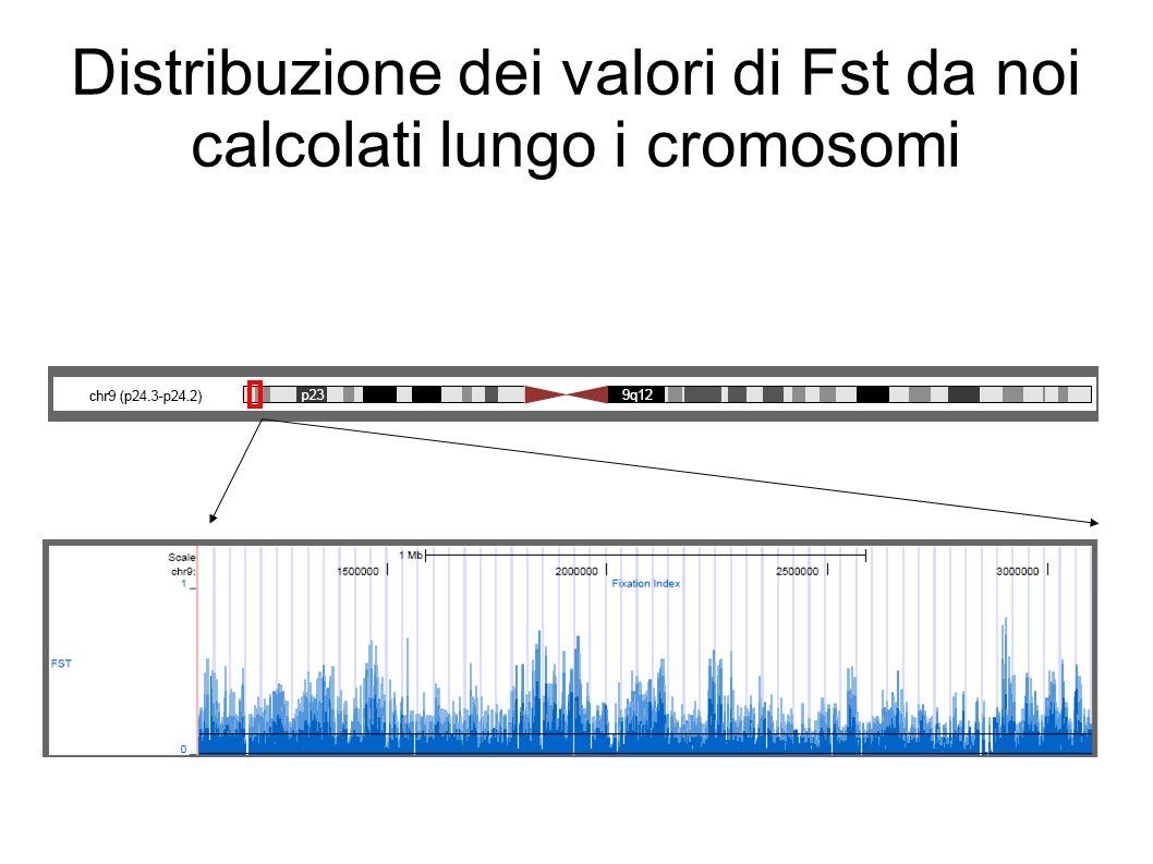 Distribuzione dei valori di Fst da noi calcolati lungo i cromosomi