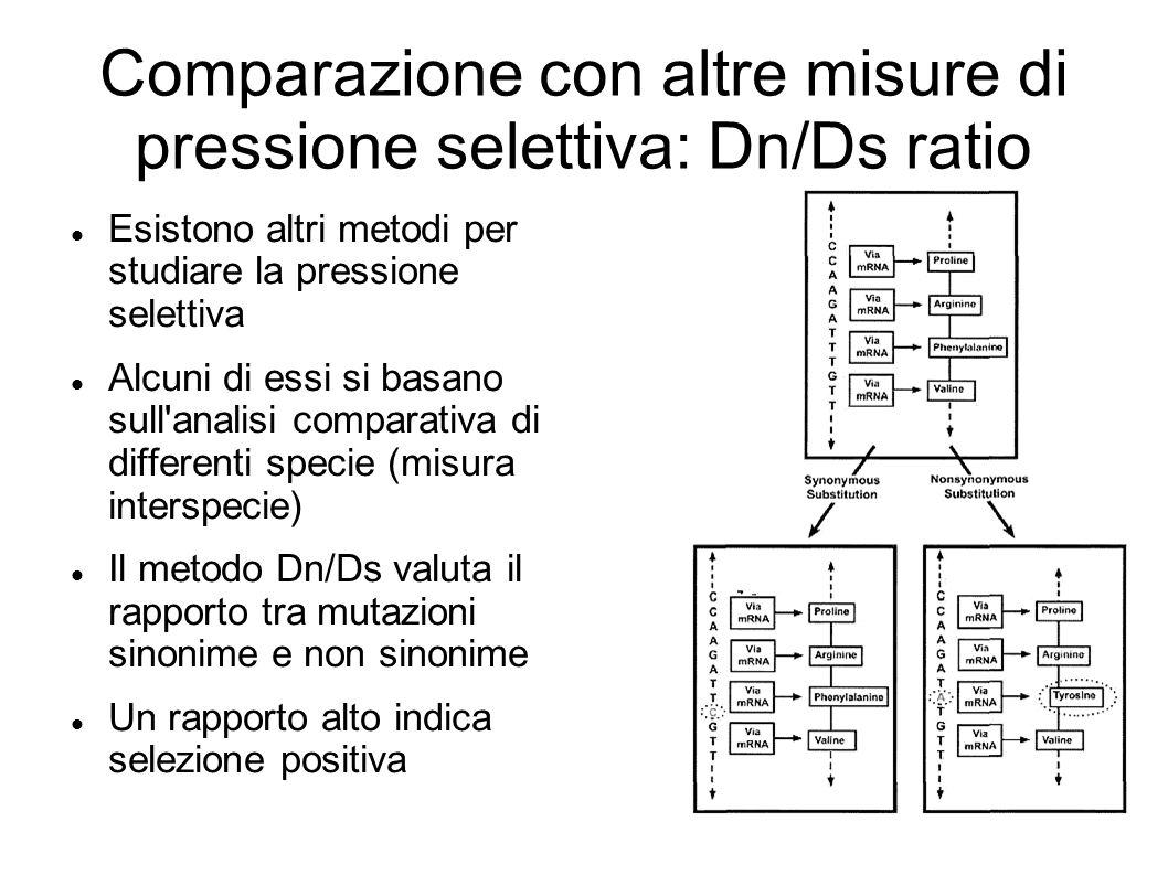 Comparazione con altre misure di pressione selettiva: Dn/Ds ratio Esistono altri metodi per studiare la pressione selettiva Alcuni di essi si basano s