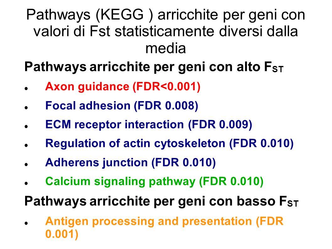 Pathways (KEGG ) arricchite per geni con valori di Fst statisticamente diversi dalla media Pathways arricchite per geni con alto F ST Axon guidance (F
