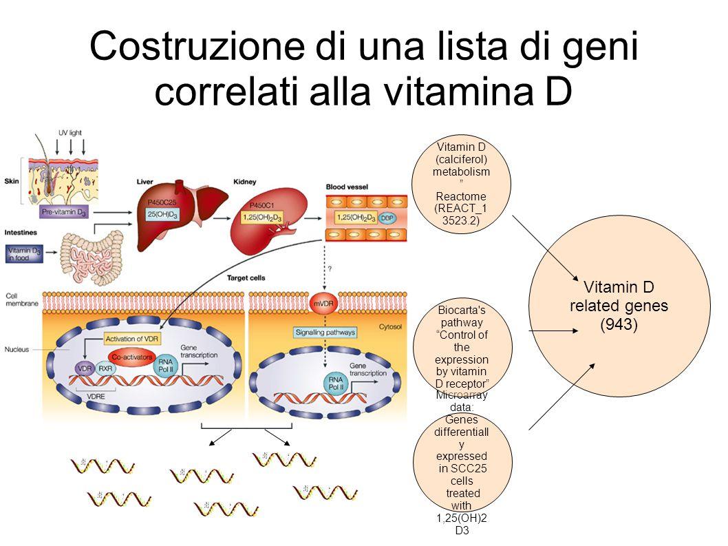 Costruzione di una lista di geni correlati alla vitamina D Vitamin D related genes (943) Microarray data: Genes differentiall y expressed in SCC25 cel
