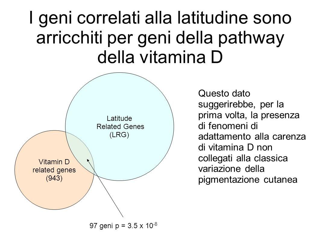I geni correlati alla latitudine sono arricchiti per geni della pathway della vitamina D Vitamin D related genes (943) Latitude Related Genes (LRG) 97